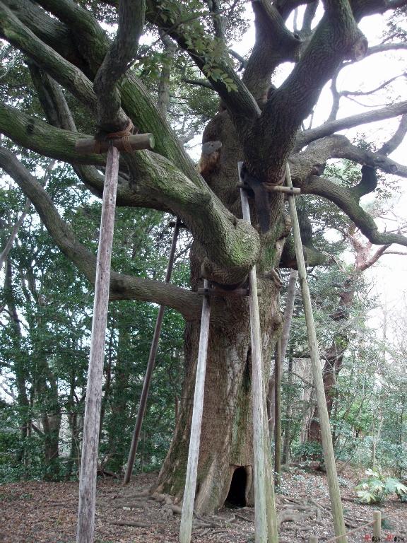 chateau-kanazawa-hiver-arbre-jardin