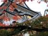 chateau-hikone-entre-branches-momiji