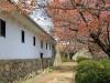 himeji-chateau-spectacle-ninja-muraille-jardins-haut