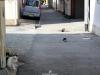 himeji-ville-chats-rue