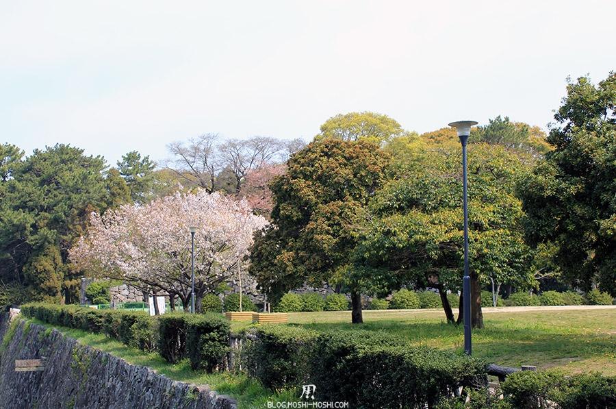 chateau-nagoya-aichi-cerisier-fleuri
