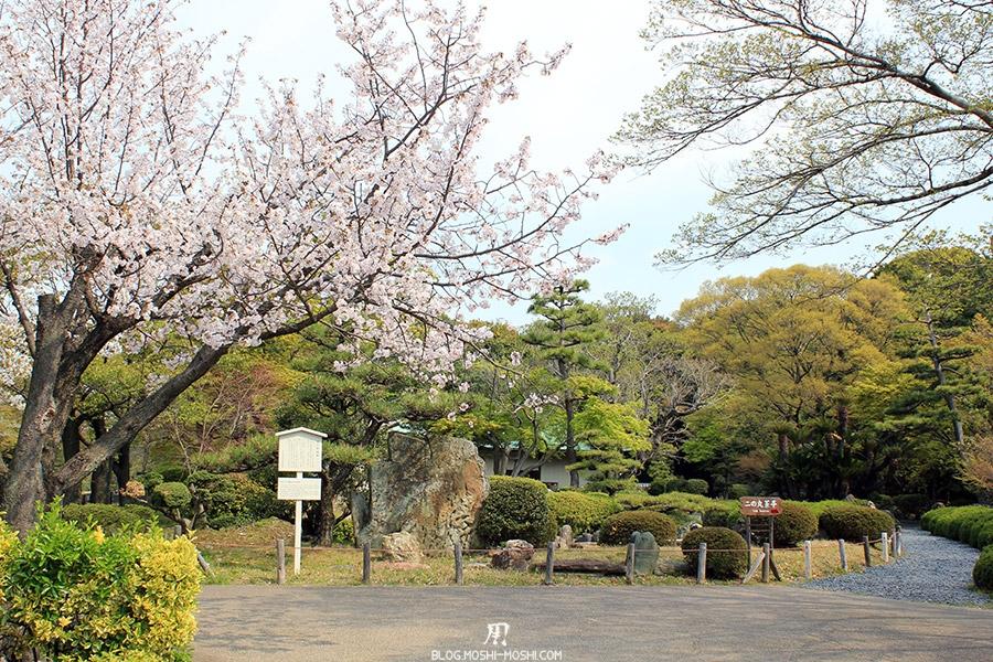chateau-nagoya-aichi-parc-cerisier-fleuri-sakura