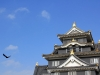 okayama-chateau-corbeau-saison-momiji-face-corbeau