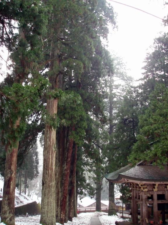 eihei-ji-hauteur-arbre