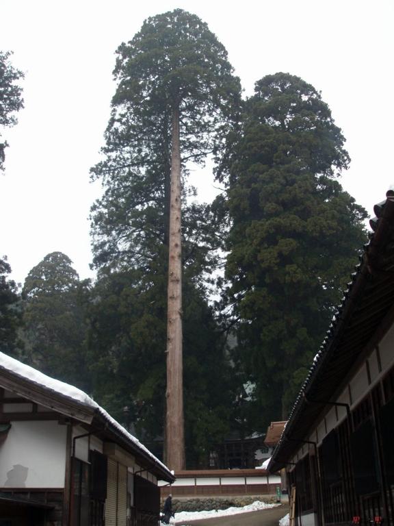 eihei-ji-immense-pin
