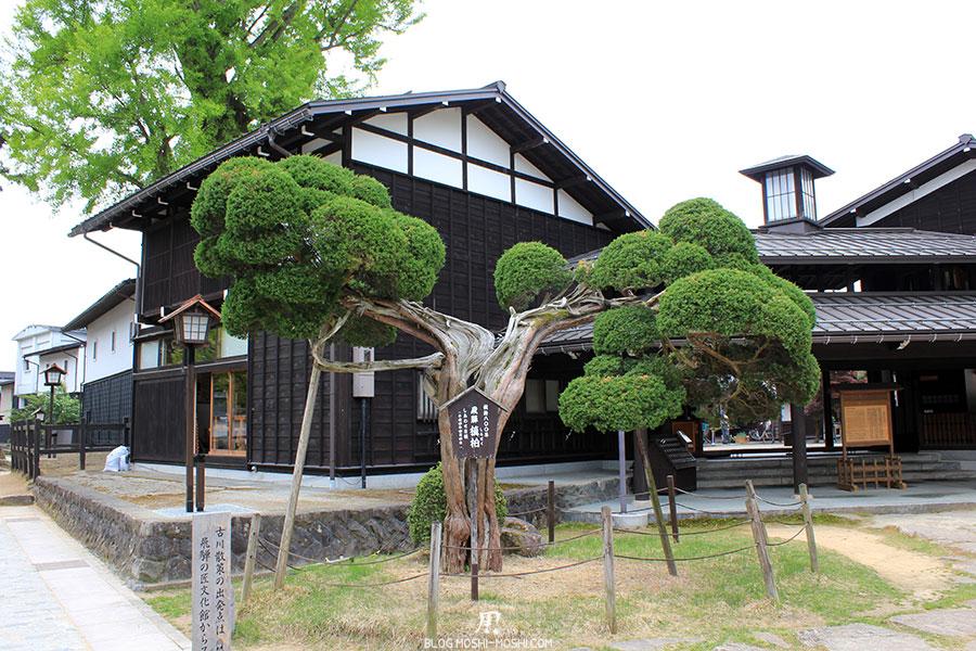 gifu-hida-furukawa-vieille-ville-arbre-foudroye