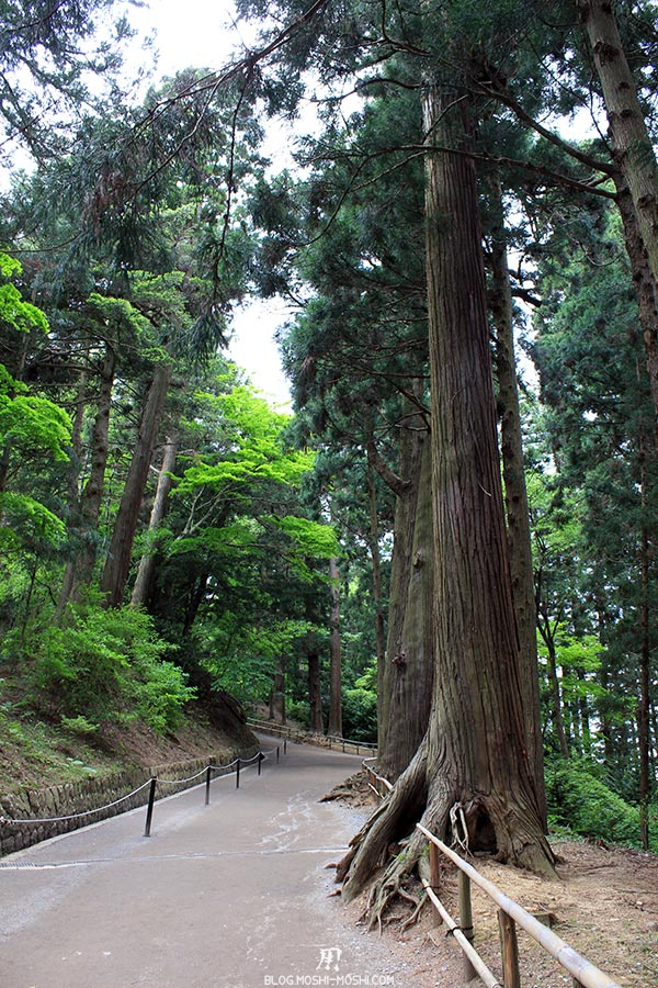 hiraizumi-patrimoine-unesco-chuson-ji-pente-bordee-pins-enormes