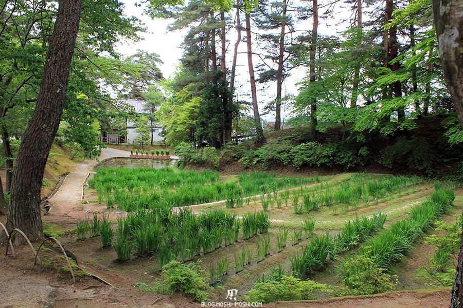 hiraizumi-patrimoine-unesco-motsu-ji-plantation-iris-bois