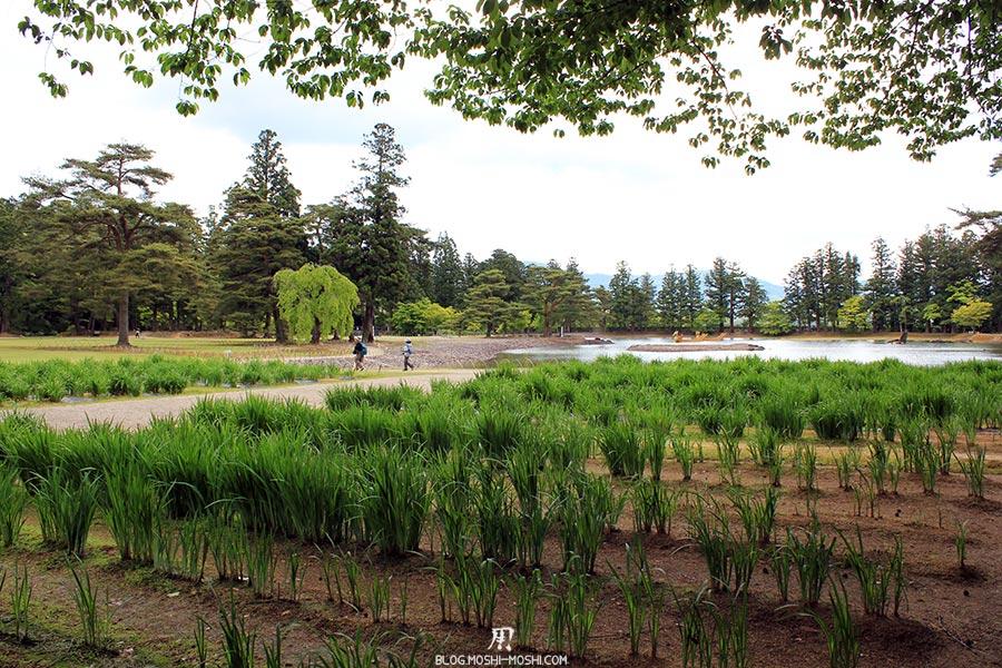 hiraizumi-patrimoine-unesco-motsu-ji-plantation-iris-lac
