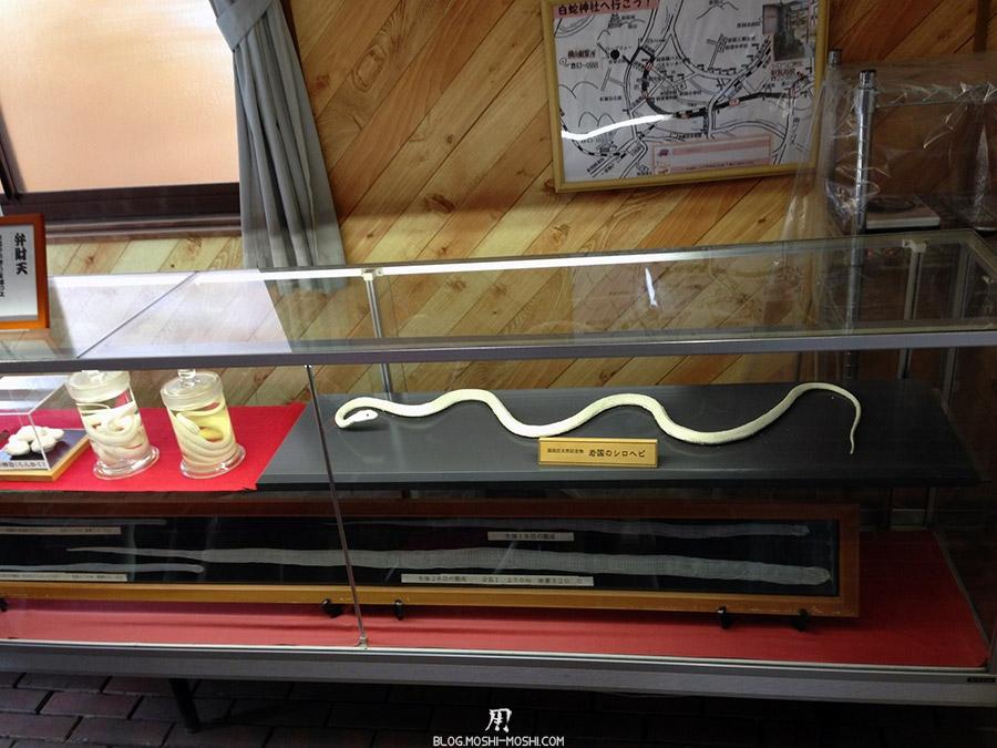 iwakuni-yamaguchi-parc-kikko-musee-serpent-blanc-tresor-nationaux-conservation