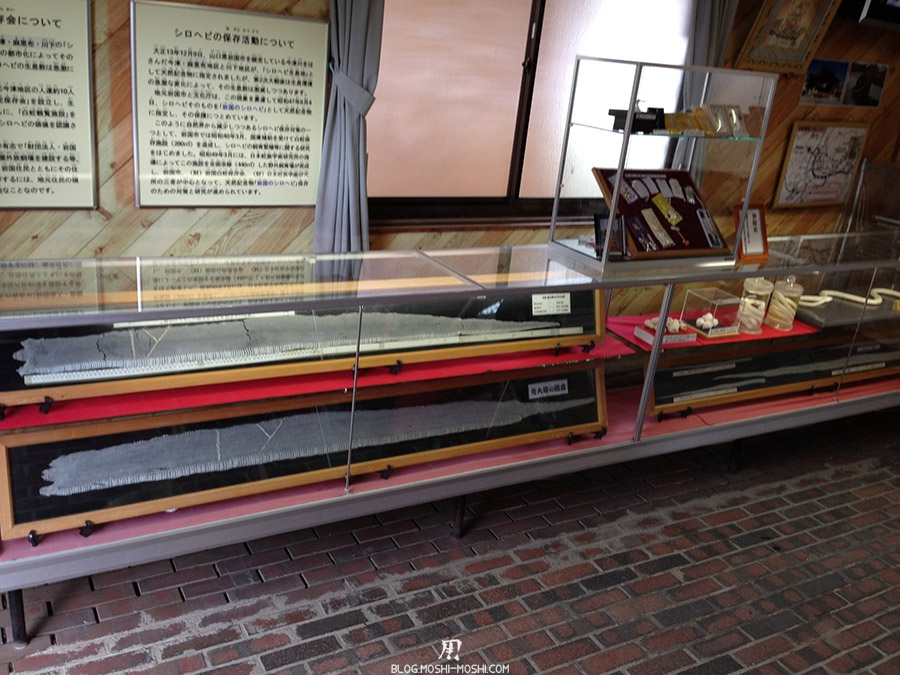iwakuni-yamaguchi-parc-kikko-musee-serpent-blanc-tresor-nationaux-peaux