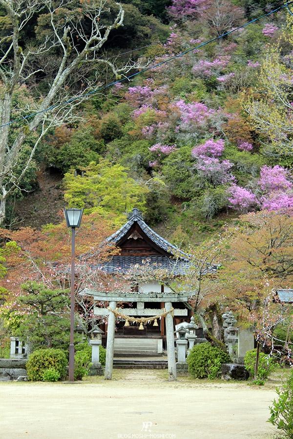 iwakuni-yamaguchi-petit-sanctuaire-azalees-violettes