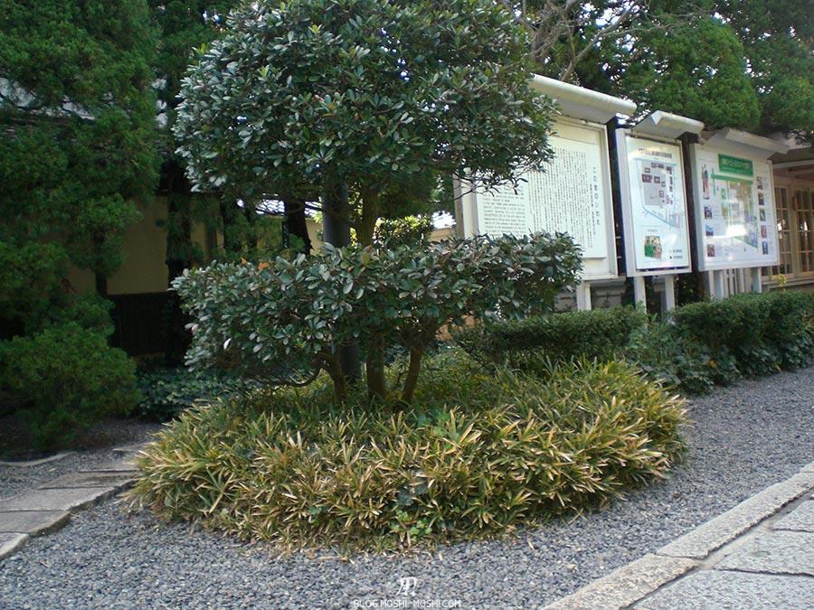 japon-vu-par-enfant-4-ans-arbustes