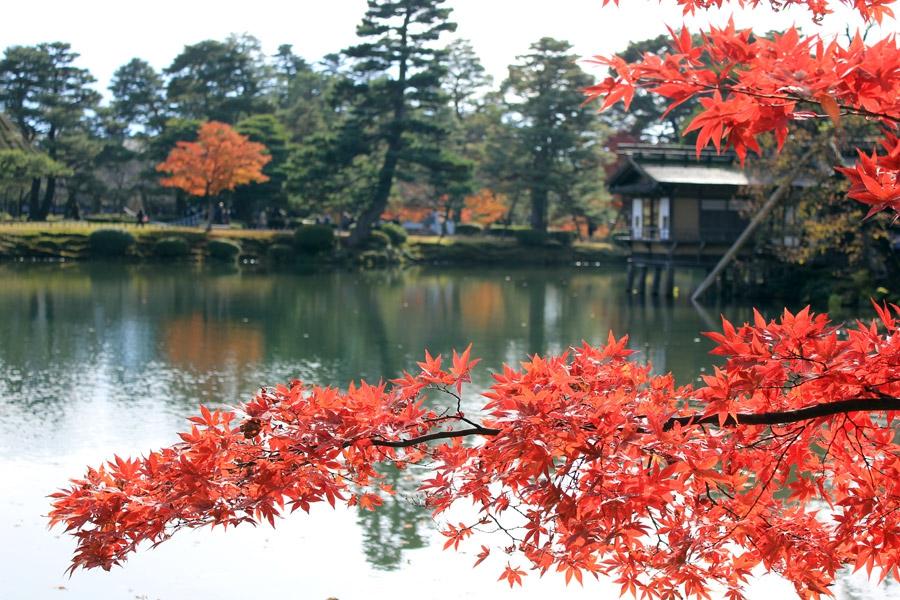 kanazawa-kenrokuen-saison-momiji-branche-momiji-fond-etang