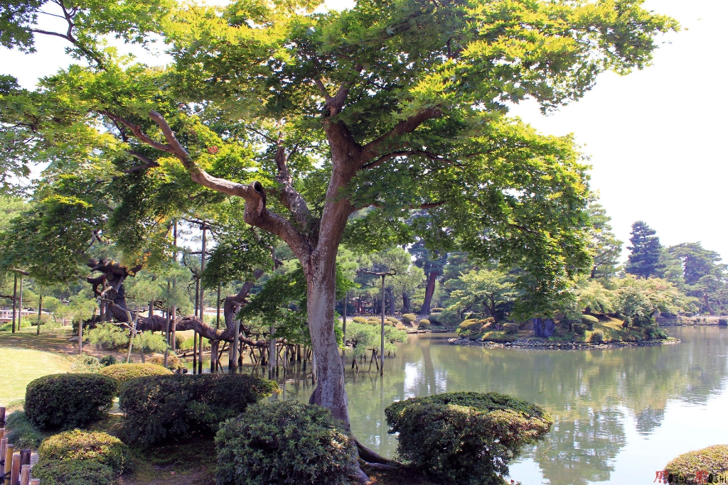 parc-kenrokuen-ete-respect-arbre