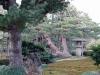 parc-kenrokuen-hiver-arbre-etrange