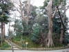 parc-kenrokuen-hiver-chemin-secret-totoro