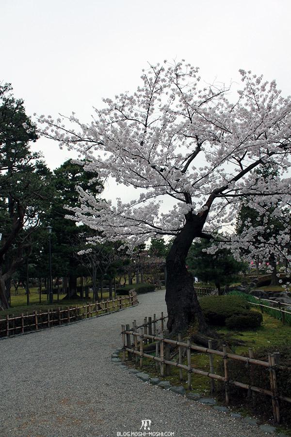 komatsu-parc-rojyou-matsuri-saison-sakura-arbre-tordu