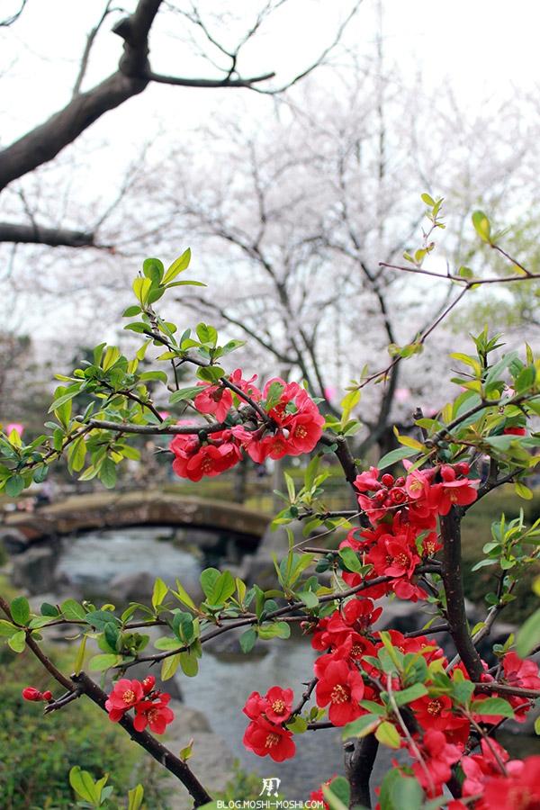 komatsu-parc-rojyou-matsuri-saison-sakura-azalees-rouges