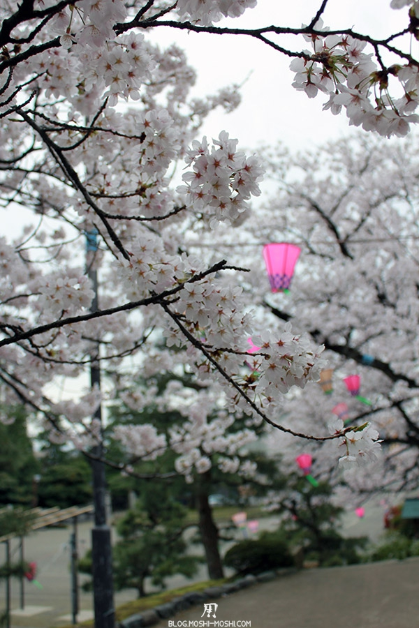 komatsu-parc-rojyou-matsuri-saison-sakura-branche-cerisiers-lanternes-verticale