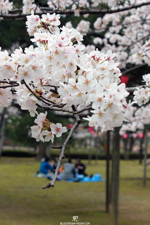 komatsu-parc-rojyou-matsuri-saison-sakura-branche-cerisiers-verticale