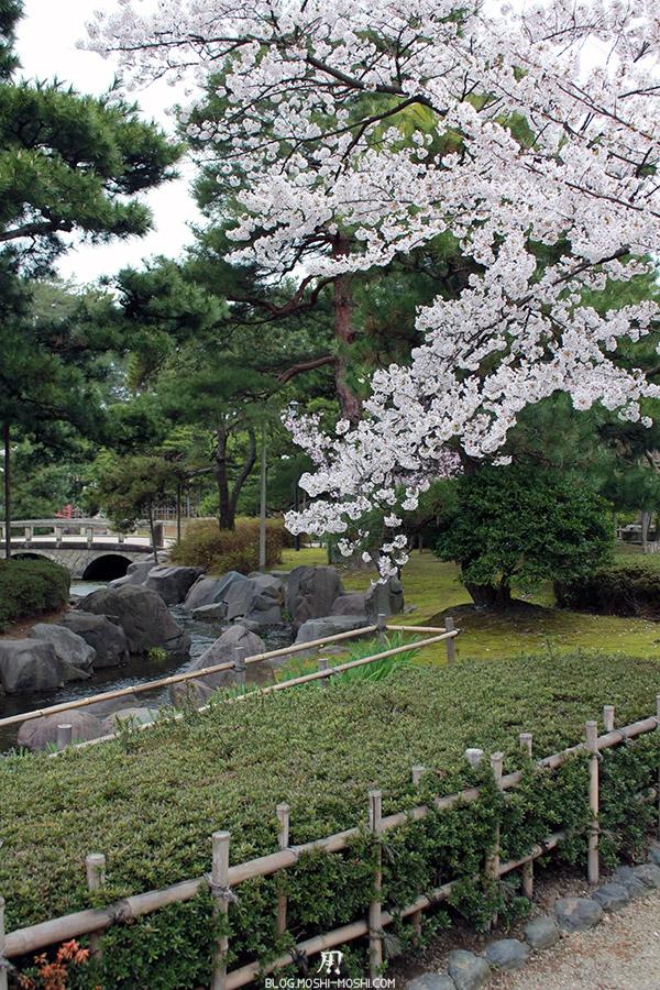 komatsu-parc-rojyou-matsuri-saison-sakura-branche-riviere