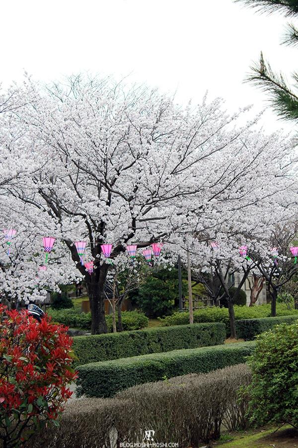 komatsu-parc-rojyou-matsuri-saison-sakura-cerisiers-arbuste-alyzee