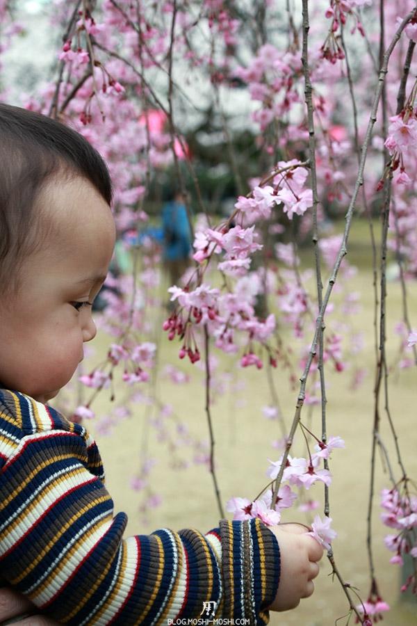 komatsu-parc-rojyou-matsuri-saison-sakura-kai-kun-etude-cerisier
