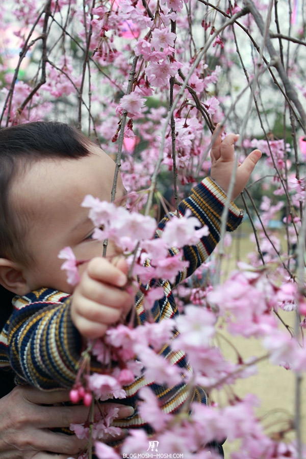 komatsu-parc-rojyou-matsuri-saison-sakura-kai-kun-joue-cerisier
