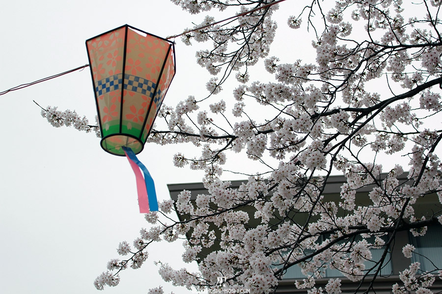 parc Rojyou komatsu-matsuri-saison-sakura-lanterne-cerisiers-blancs