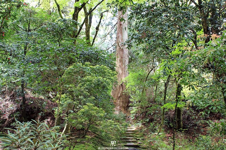 komatsu-temple-natadera-jungle-arbre-geant