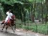 kyoto-aoi-matsuri-sanctuaire-shimogamo-jinja-cavalier-magnifique-cheval-criniere-au-vent