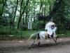 kyoto-aoi-matsuri-sanctuaire-shimogamo-jinja-cavalier-pleine-vitesse-cheval-muscle