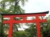 kyoto-aoi-matsuri-sanctuaire-shimogamo-jinja-grand-torii