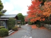 temple-tenryu-ji-kyoto-arashiyama-momiji-allee-bordee-erable