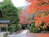 temple-tenryu-ji-kyoto-arashiyama-momiji-cours-tapis-feuilles