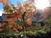 temple-tenryu-ji-kyoto-arashiyama-momiji-enfin-soleil