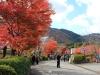 temple-tenryu-ji-kyoto-arashiyama-momiji-entree