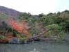 temple-tenryu-ji-kyoto-arashiyama-momiji-etang-carpe-koi-arbre-penche