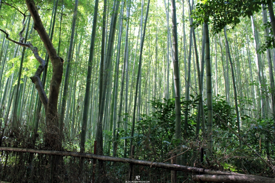 arashiyama-kyoto-foret-bambou-perte-de-vue