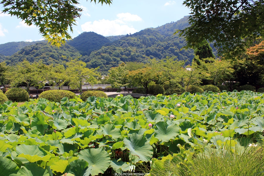 arashiyama-kyoto-tenryu-ji-jardin-nenuphares