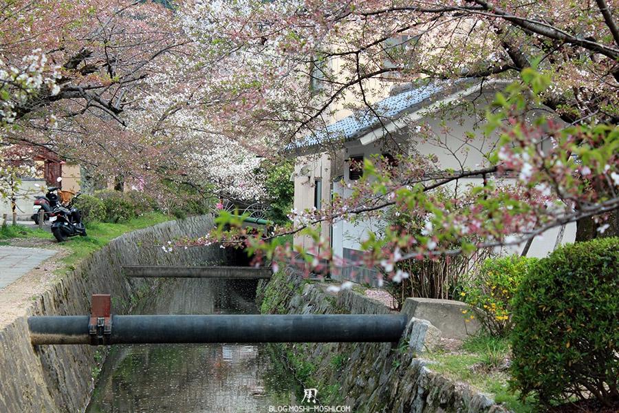ginkaku-ji-temple-argent-kyoto-saison-sakura-chemin-philosophes-riviere-maison-entre-petales-cerisier-japonais
