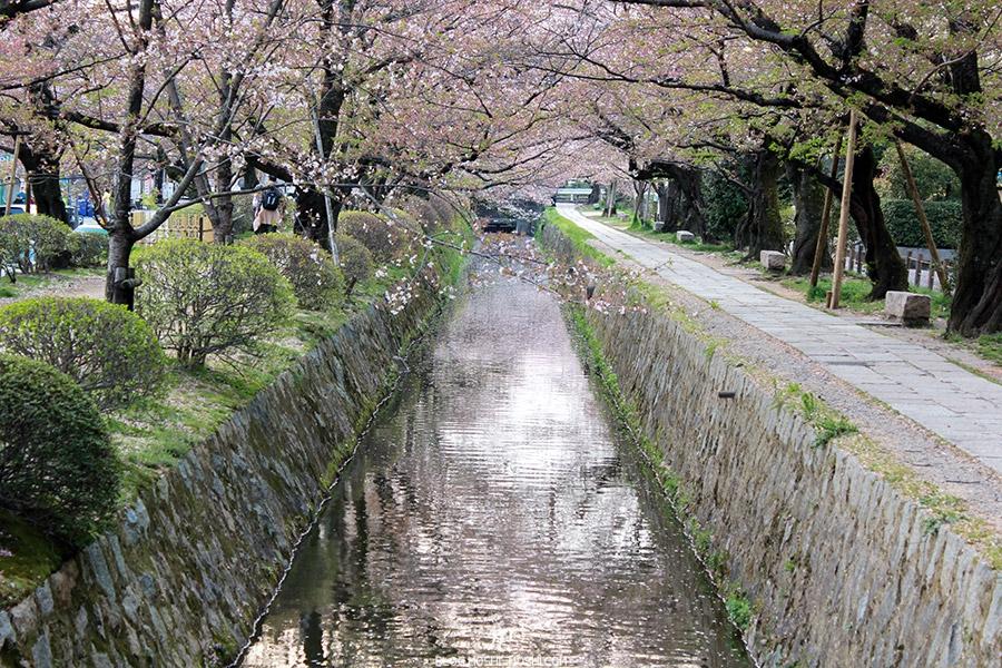 ginkaku-ji-temple-argent-kyoto-saison-sakura-chemin-philosophes-riviere-petale-cerisier-japonais