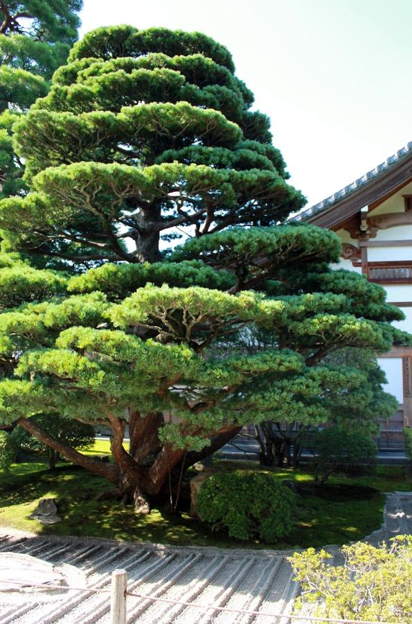 ginkaku-ji-kyoto-pin-jardin-sable