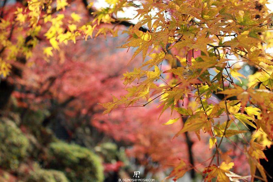 sanctuaire-kiyomizudera-kyoto-saison-momiji-feuilles-jaunes-momiji