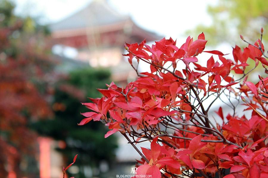 sanctuaire-kiyomizudera-kyoto-saison-momiji-feuilles-rouges