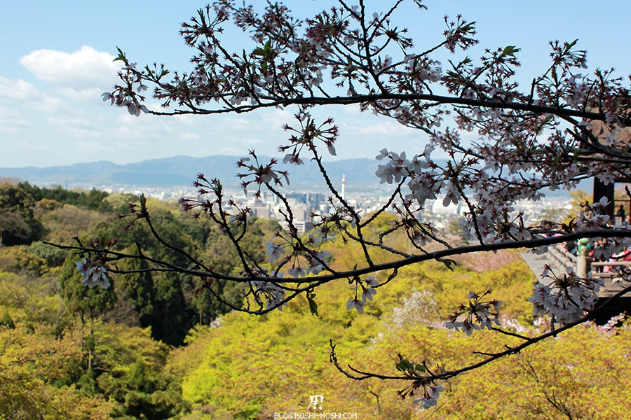 kiyomizudera-sanctuaire-kyoto-saison-sakura-branche-cerisier-japonais-tour-kyoto