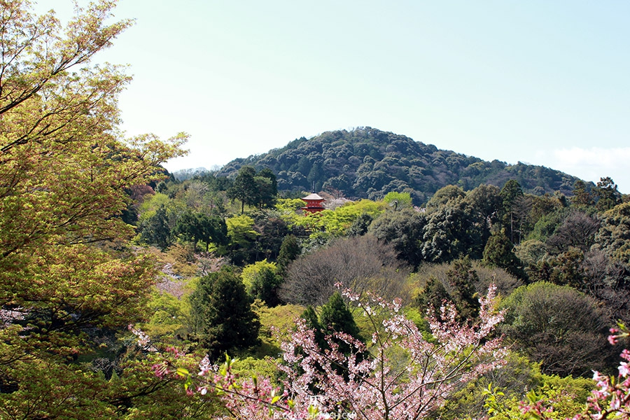 kiyomizudera-sanctuaire-kyoto-saison-sakura-pagogue-dans-foret