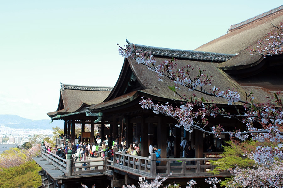 kiyomizudera-sanctuaire-kyoto-saison-sakura-plateforme-principale-travers-branche-cerisier-japonais