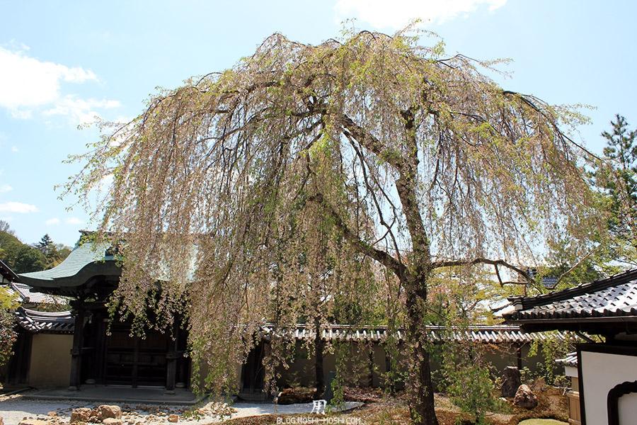 temple-kodai-ji-kyoto-saison-sakura-cerisier-tombant